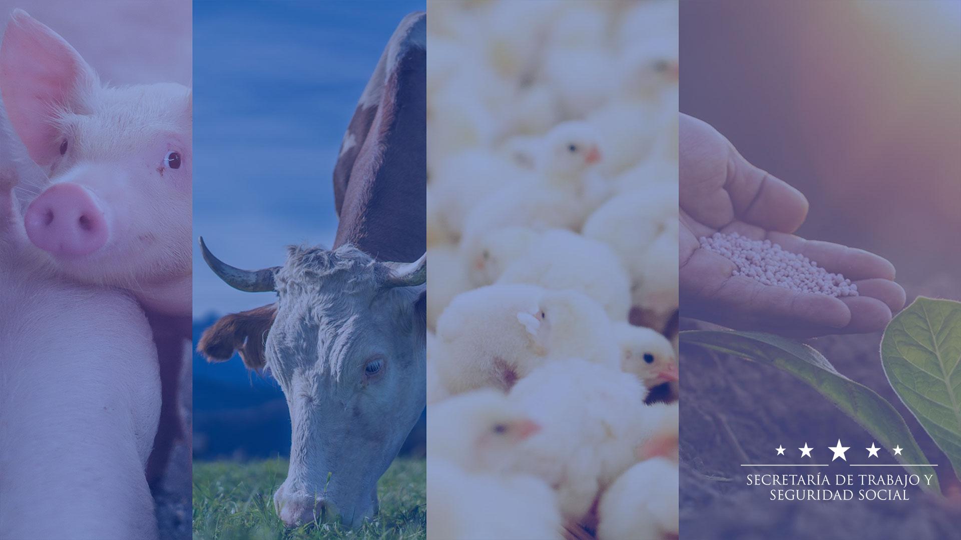 Bioseguridad por motivo de la pandemia COVID-19 para el Sector Industria Pecuaria